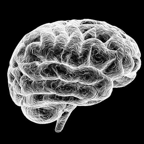 Brain_500x459